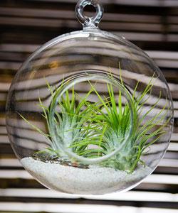 Targ de Craciun Design Your Christmas