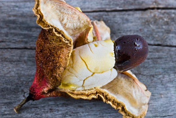 fructe ackee