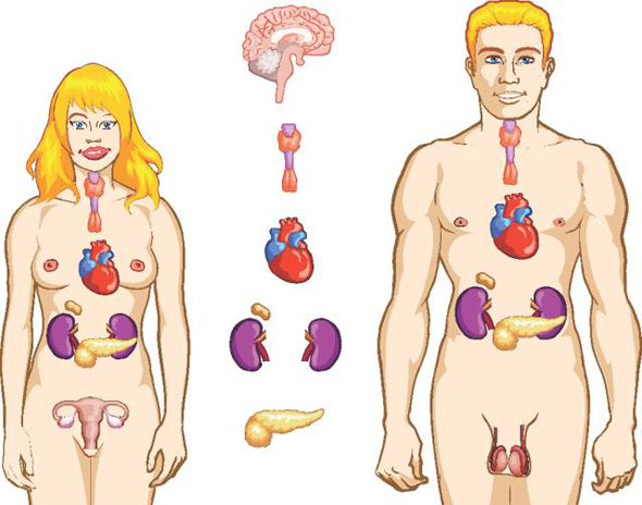 analize medicale explicate ecografie abdominala, analize medicale explicate tiroida