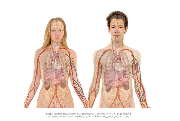 pietre la rinichi cauze