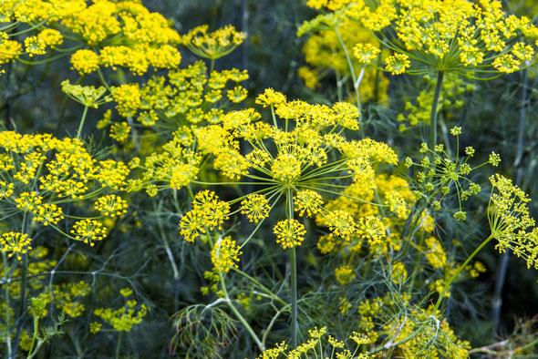 image gallery plante medicinale
