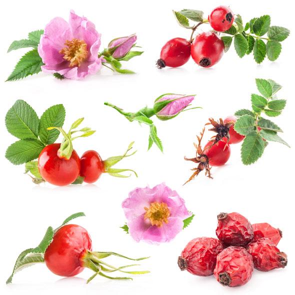 beneficii-plante-medicinale-romanesti-macese.jpg