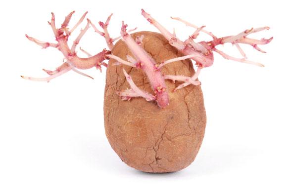 contraceptie cu cartof