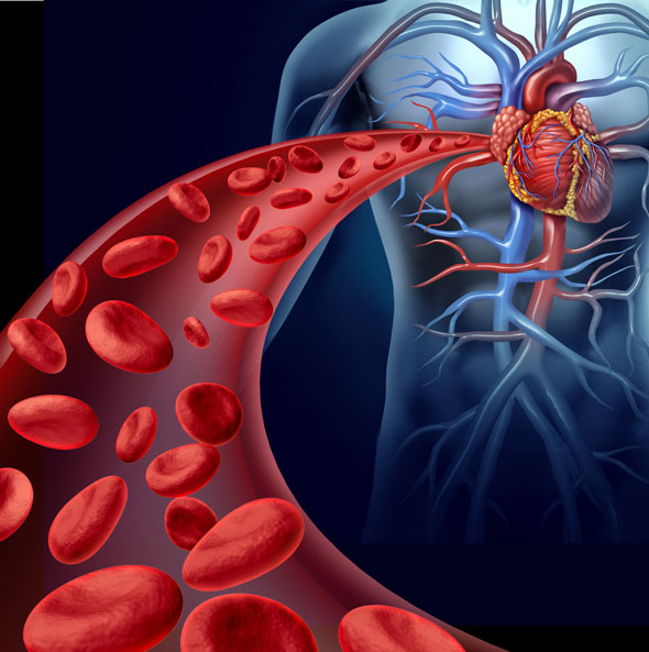 curatarea sangelui purificarea sangelui
