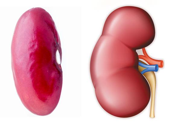 fasolea-se-aseamana-rinichiului.jpg