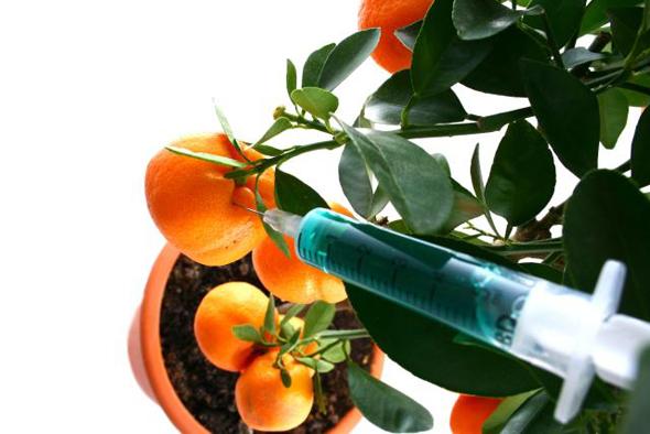 cum speli fructele si legumele de pesticide si chimicale