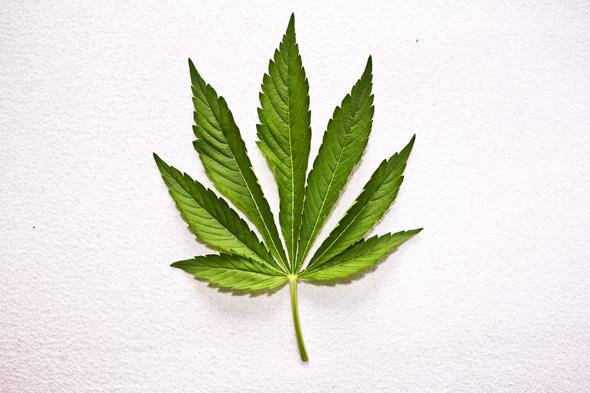marijuana / canabisul trateaza cancerul - studiu cercetatori