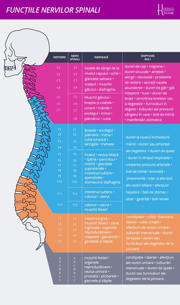 functiile nervilor spinali