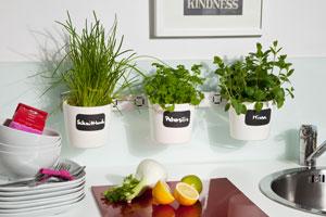 Greseli crestere plante aromatice