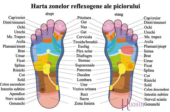 harta zonelor reflexogene ale piciorului