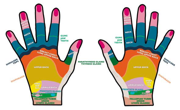 harta reflexologica a mainii
