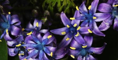 Horoscop floral: Zodia Albastrea
