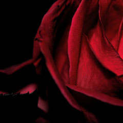 iubirea, un puternic analgezic