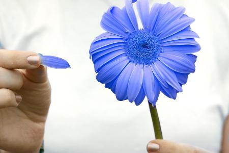 Legile dragostei: ganduri impletite cu sentimente