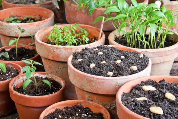 legume plantate in apartament