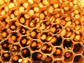 masca de ten cu miere