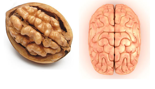 nuca-se-aseamana-creierului.jpg
