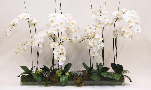 Ingrijire orhidee