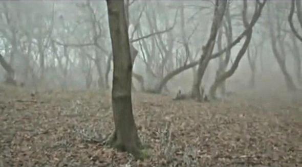 copaci padurea baciu