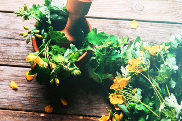 plante-medicinale-beneficii-rostopasca.jpg