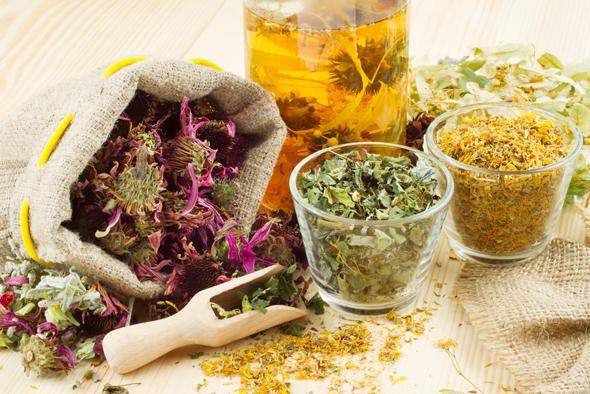 ghid plante medicinale