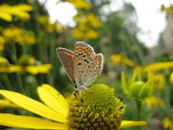 beneficii polen