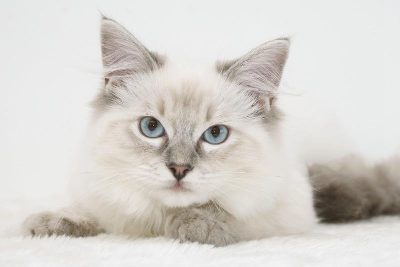 nume de pisici