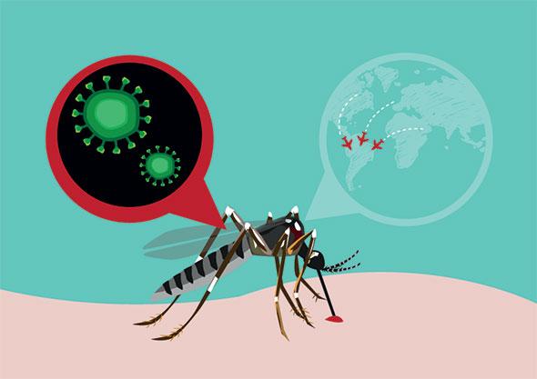 infectia c virusul zika