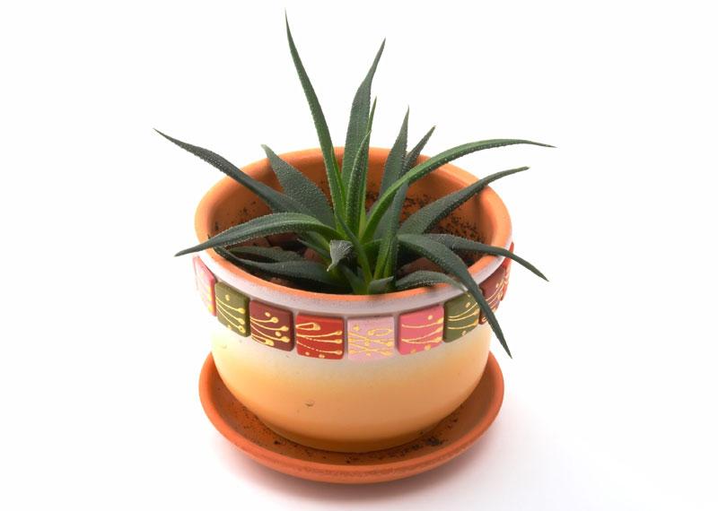 plante de interior ce purifica aerul. Black Bedroom Furniture Sets. Home Design Ideas