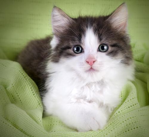 poze cu pisici cele mai frumoase poze cu pisici www kudika ro