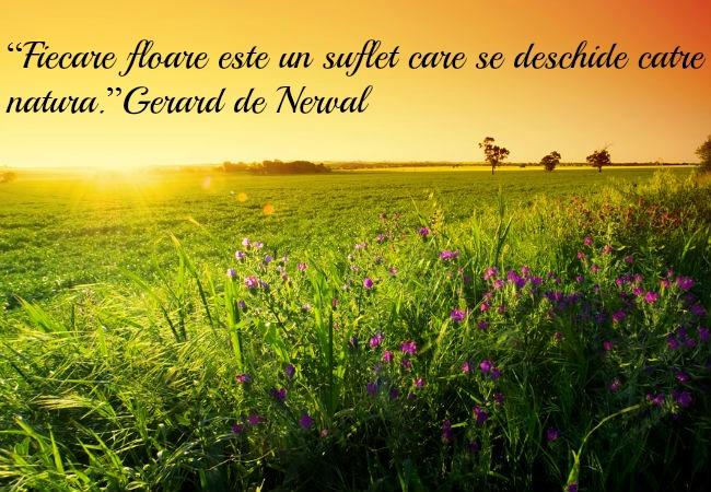 citate despre sarbatoarea floriilor Imagini de Florii: o colectie deosebita de poze si citate despre flori citate despre sarbatoarea floriilor