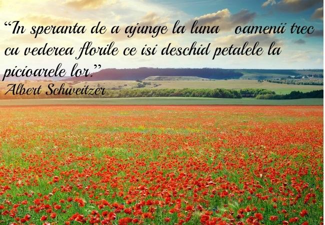 Citate Frumoase Despre Fotografie : Imagini de florii o colectie deosebita poze si citate