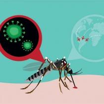 Tot ce trebuie sa stii despre tantarul Zika
