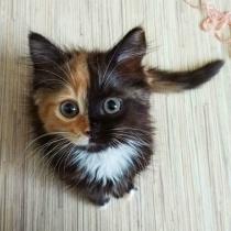 Ea este cea mai simpatica pisicuta de pe internet