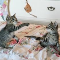 Piese cu imprimeuri cu pisicute - detalii meWOW!