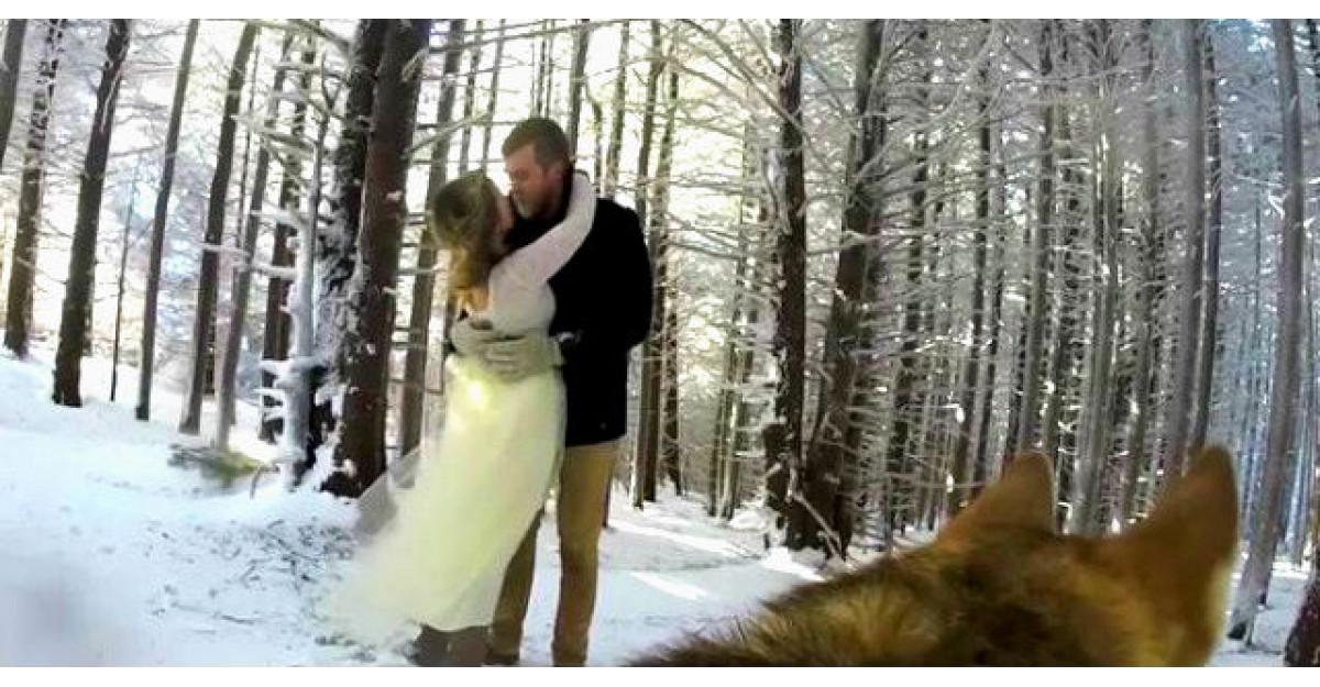 Au vrut ca nunta lor sa fie filmata de catel. Rezultatul este absolut MAGIC