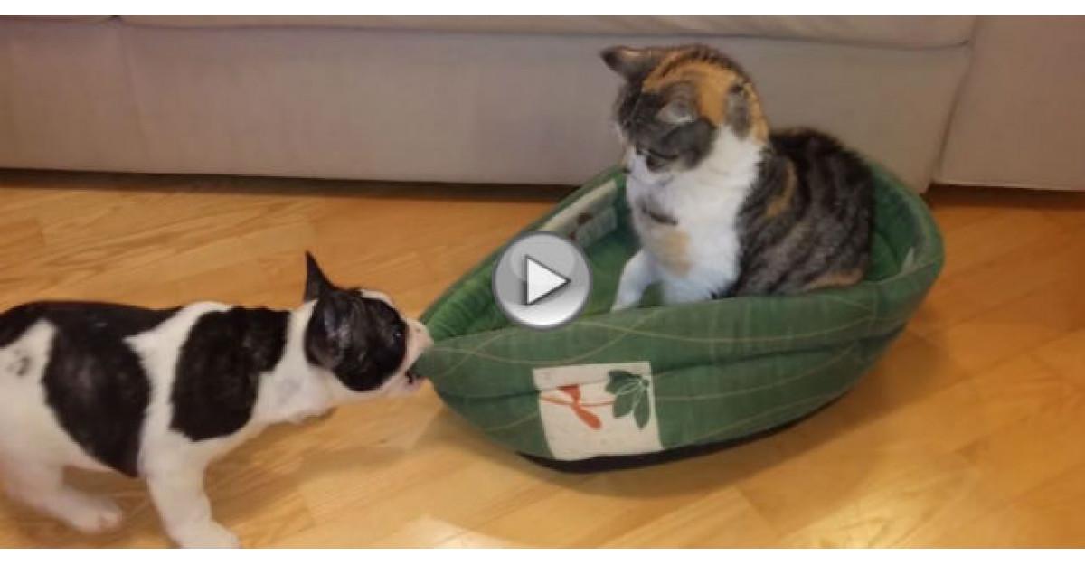 Video: Pisicuta i-a furat culcusul. Reactia catelului este super amuzanta
