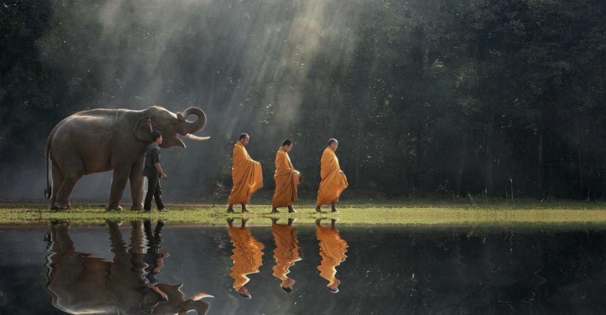Cea mai frumoasa lectie de viata budista