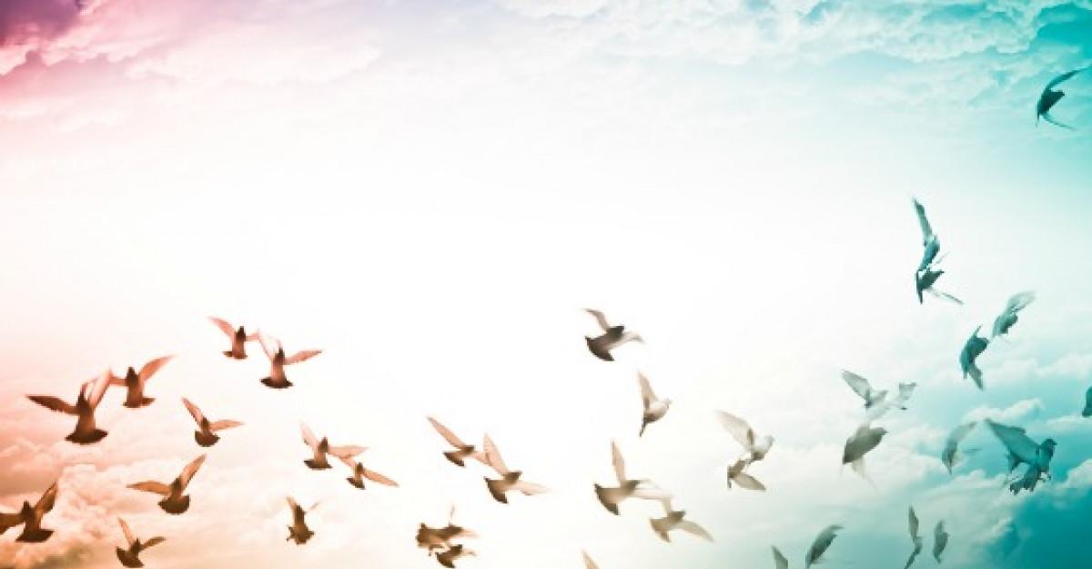 Poezie care inlatura nesiguranta si anxietatea