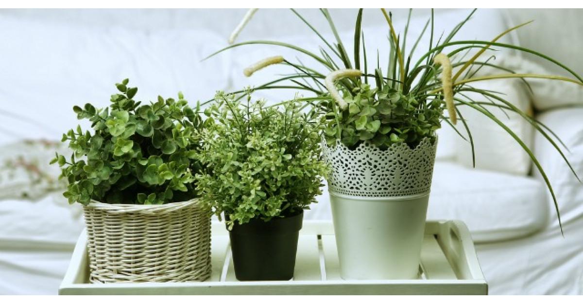 6 plante pe care sa le ai in dormitor ca sa fii sanatos