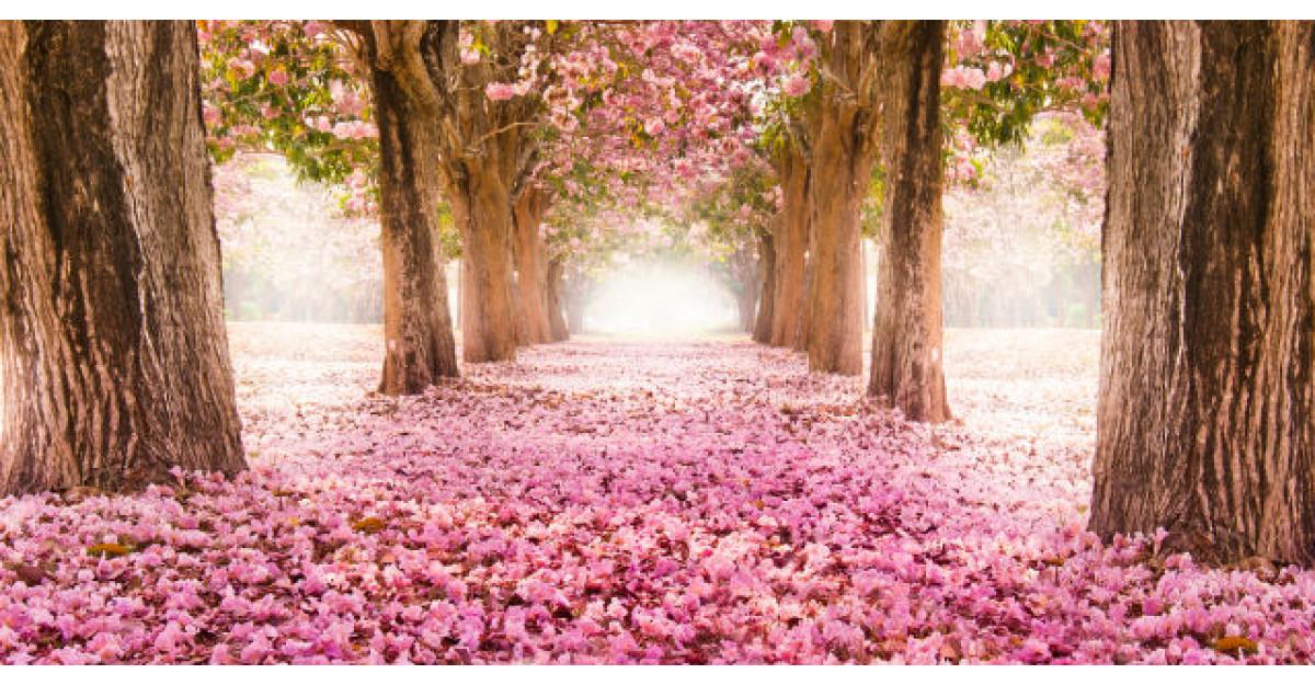 Tot ce trebuie sa stii despre terapia cu flori