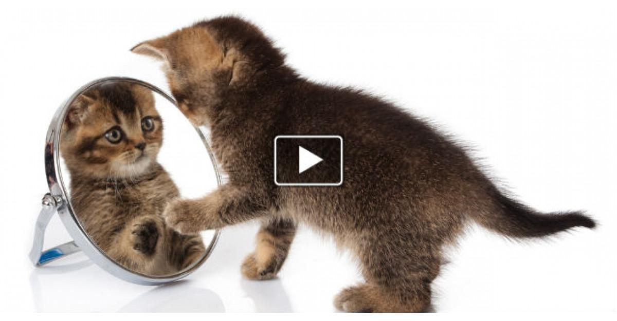 Video: Reactia super amuzanta a acestei pisicute cand se vede in oglinda pentru prima data