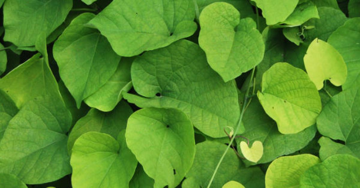 Planta anticancer din Romania pe care foarte putini o recunosc in natura