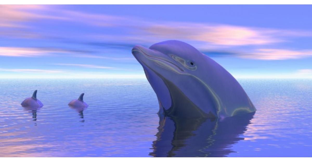 Au facut selfie-uri cu delfinul. Insa ce s-a intamplat este tragic