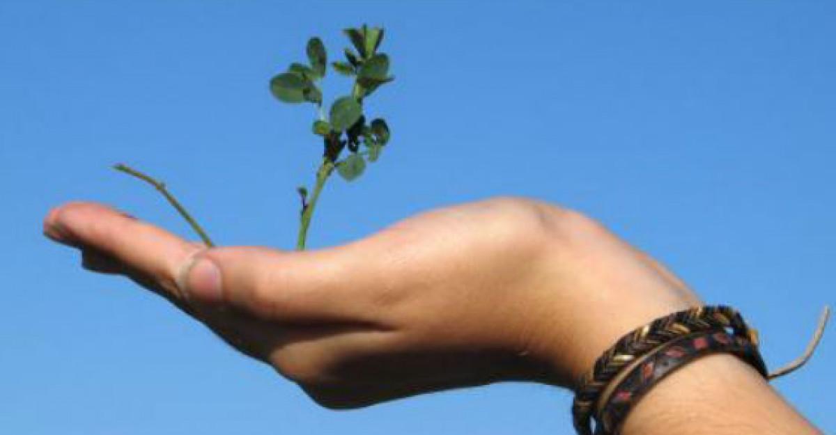 Foto: Copacul la umbra caruia a stat Iisus readus la viata dupa 2000 de ani!