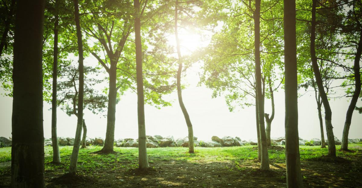 De cati copaci e nevoie pentru a reduce poluarea cu dioxid de carbon