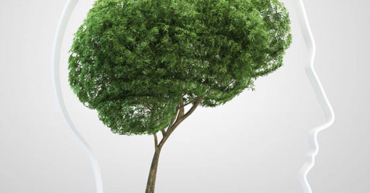 Planta care poate sa iti creasca memoria cu 75%!