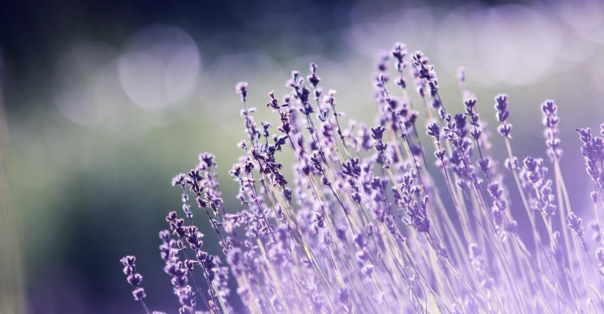 6 flori de vară pentru grădina ta