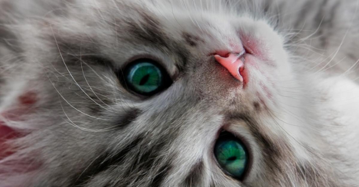20 de imagini cu animale