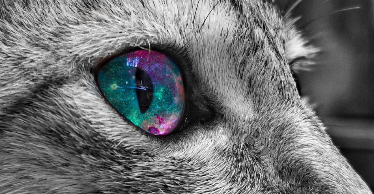 Oamenii de știință confirmă: Pisicile și câinii pot vedea spirite